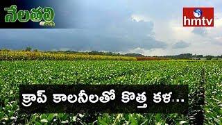 Telangana Crop Colonies Uses And Profits | Nela Talli | hmtv