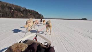 Dog Sledding - Mushing  in Fairbanks, Alaska