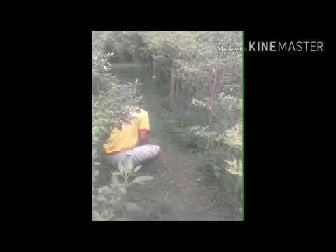 Video Lucu Introgasi Tukang Ngaret