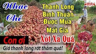 Nhạc Chế | Thanh Long Bình Thuận Được Mùa Mất Giá | Nông Dân Điêu Đứng
