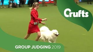 Pastoral Group Judging And Presentation | Crufts 2019