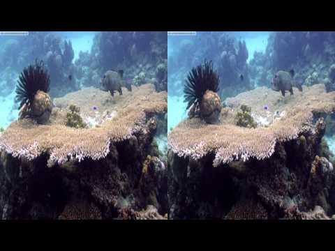 """yt3d:enable=true"" - Ocean Circus 3D - underwater around the world - 3D video"