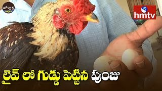లైవ్ లో గుడ్డు పెట్టిన పుంజు | Khammam | Jordar news  | hmtv