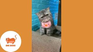 Cute Dogs and Cats   Funny Cats and Dogs Videos Compilation 2019   Cute Is Not Enough