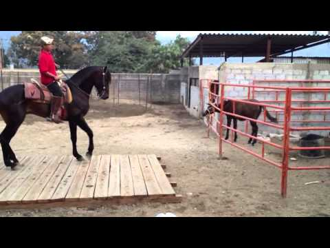Animated Dancing Horse Dancing Horse Manzanillo