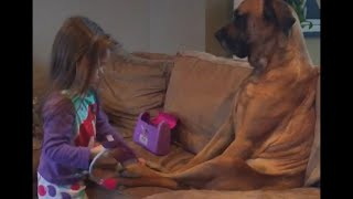 Little Girl Makes Sure her Dog is Healthy