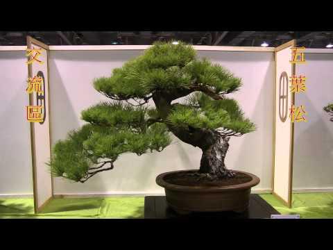 2013 Taiwan Bonsai Exhibition(2),第18回全國盆栽展,盆栽交流區-寧靜拍賣,Full HD 1080p