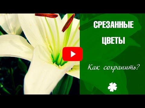 Срезанные цветы ➡ Как сохранить подаренные цветы? Розы 🌼 Герберы 🌼 Тюльпаны