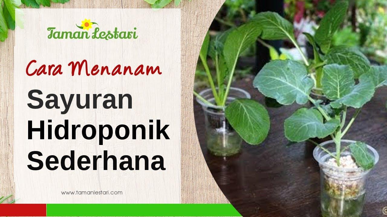 Hidroponik Sayuran Kangkung Seri Hidroponik Sayuran Fase