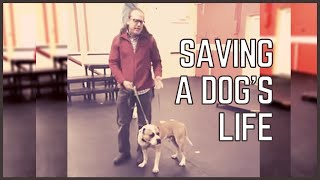 Saving a dogs life | Solid K9 Training Dog Training