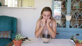 SUCCULENTS ARE THE TRENDIEST PLANT