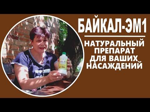 Байкал ЭМ-1 – применение и отзывы агронома