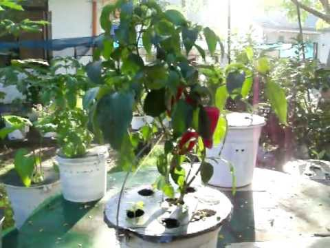 ED'S HYDROPONICS VEGETABLES & ORNAMENTALS WICK SYSTEM