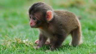Monkey is comming in sri karanpur