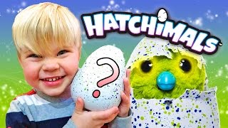 HATCHIMAL EGG SURPRISE! HIS FIRST HATCHIMAL!