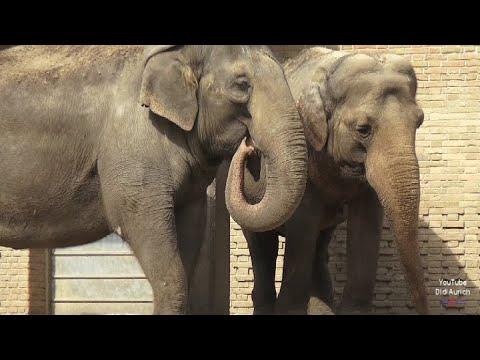 Elefanten Zoo Berlin Zoologischer Garten Berlin Zoological Garden Berliner Tierpark Elefant