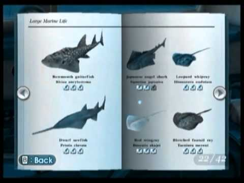 Haikouichthys fossil