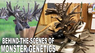 Deer Farming for INSANE Genetics | VLOG