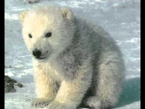Песни дворовые - Арктика