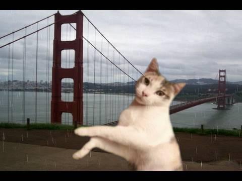Dancing Autotune Cats