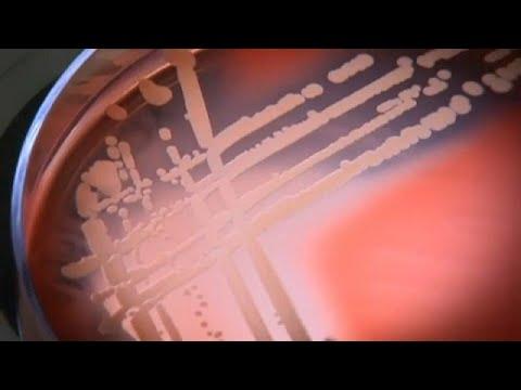 Ученые обнаружили супербактерию thumbnail