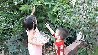 Trò chơi Minh Thư cùng em đi săn kẹo gấu