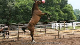 Jolly Ball Horse