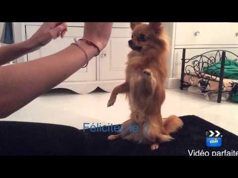 Apprendre le tour : faire le beau/belle a son chien - YouTube