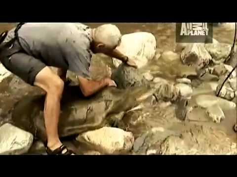 River Monsters Turtle Strikes Like a Snake
