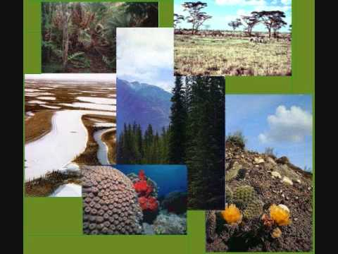 Ecosistemas y su Medio Ambiente