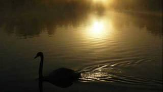 Camille Saint Saëns Carnival Of Animals The Swan