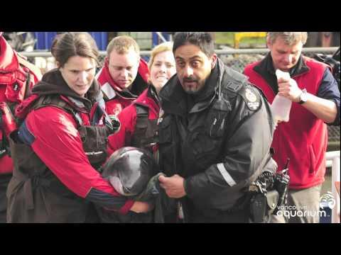 Harbour Porpoise Rescue