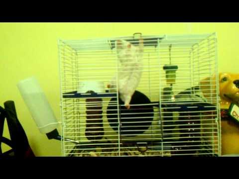 Retarded Hamster