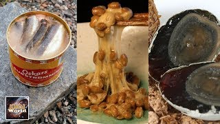 5 ऐसी डिश जिन्हें आप खाना बिल्कुल पसंद नहीं करेंगे    Khoj World