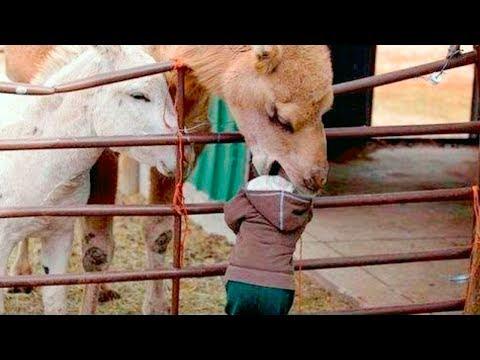 ТОП 100 Лучшие видео с животными 2018 -  СМЕШНЫЕ ЖИВОТНЫЕ , КОТЫ СОБАКИ И ДРУГИЕ