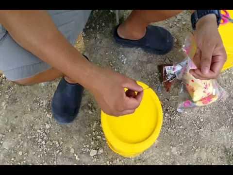 Umpan Pacu&Patin 1 ~ Greenbait Copra + Roti Bun 第一集