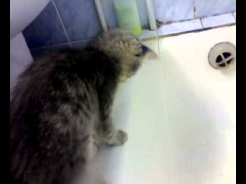 Кошка ма моется.mp4