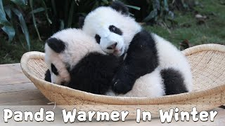 Have A Panda Warmer For A Good Sleep In Winter | iPanda