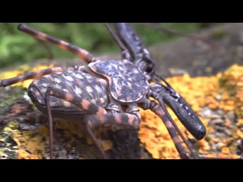 10 Most Terrifying Insects Seen From Close Distance!