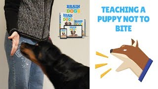 Teaching A Puppy Not To Bite