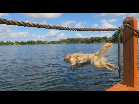 JUMPING OFF THE DOCK!  (Super Cooper Sunday #34)