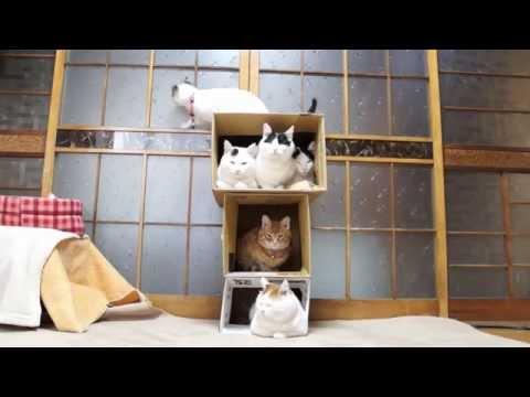 うちの猫のダンボールハウ...