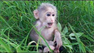 Baby Monkey Doo / Enjoy Black Beans - Funny Animals