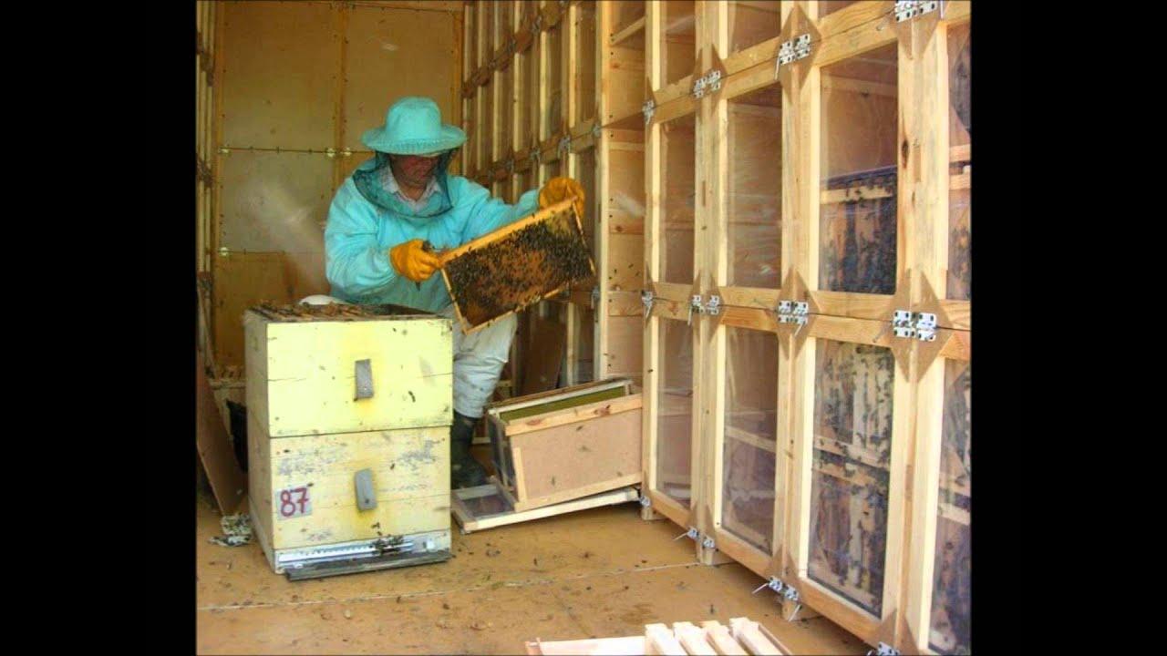 Построить павильон для пчел своими руками