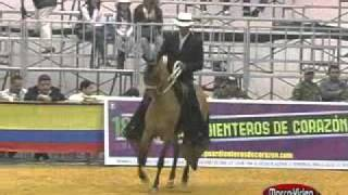 CABALLOS COLOMBIANOS 2