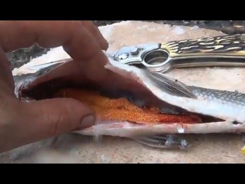Сагудай из свежего хариуса / Таежный деликатес сагудай / Сугудай