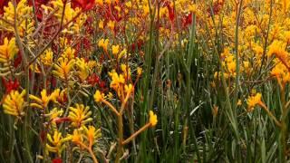 #7751, Campo de flores amarillas [Raw], Plantas y naturaleza