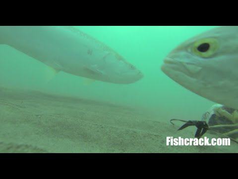 Incredible Underwater Tarpon Fishing Footage With GoPro 3!