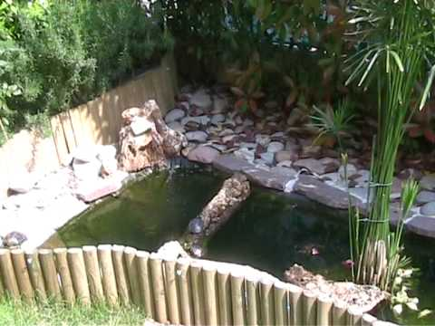 le mie 4 tartarughe d 39 acqua spiate nel laghetto a prendere