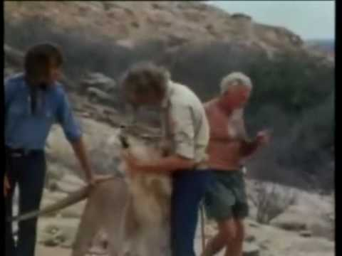 Christian The Lion! Legendado - (HD)